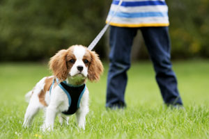 Watercress Living: Huntsville's Largest Pet Park!